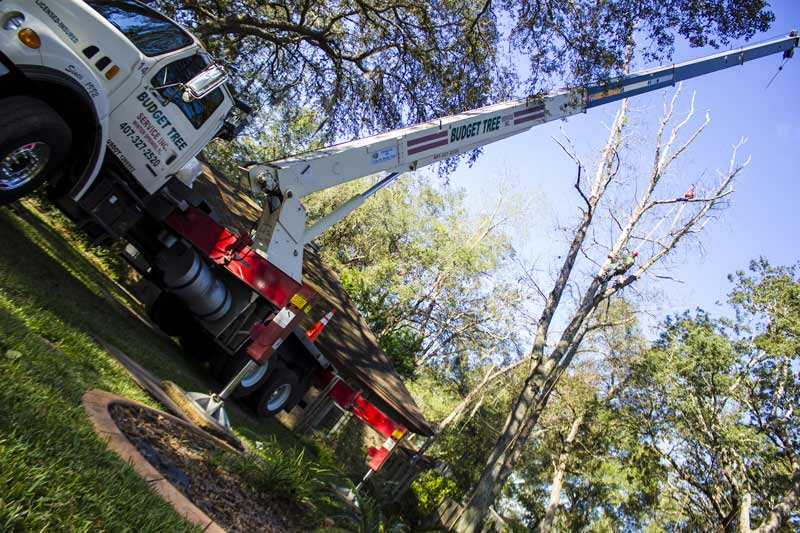 deployed tree service crane