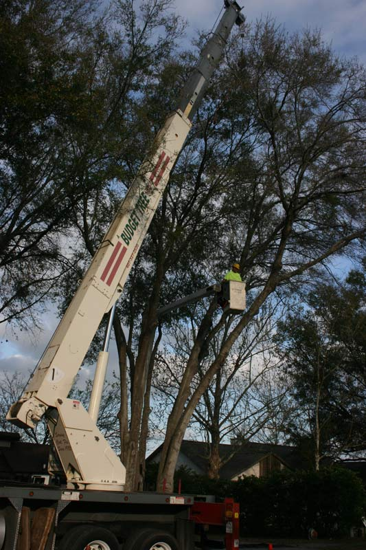 tree service crane and cherry picker doing a job