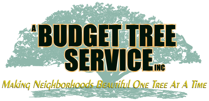 a budget tree service inc making neighborhoods beautiful one tree at a time