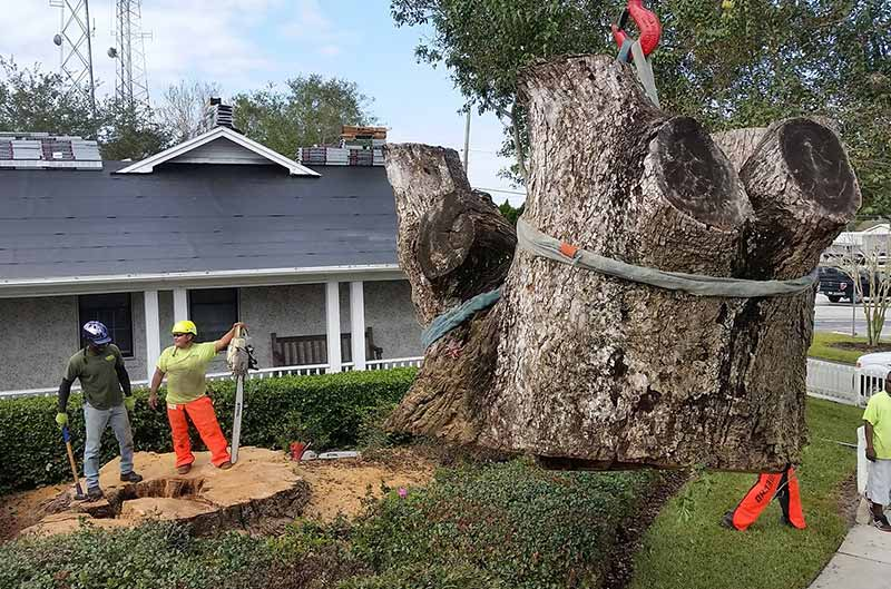Large stump being removed