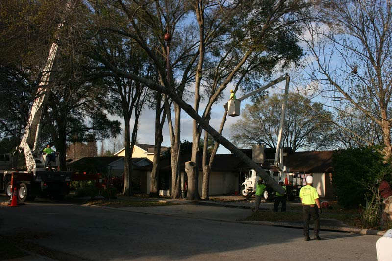 A Budget Tree Service, Inc Team
