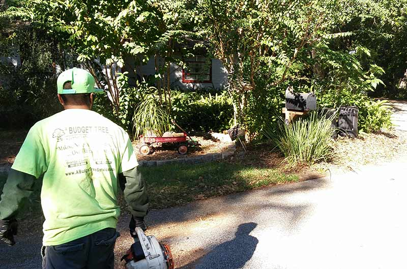 Land Clearing Services in Orlando, FL