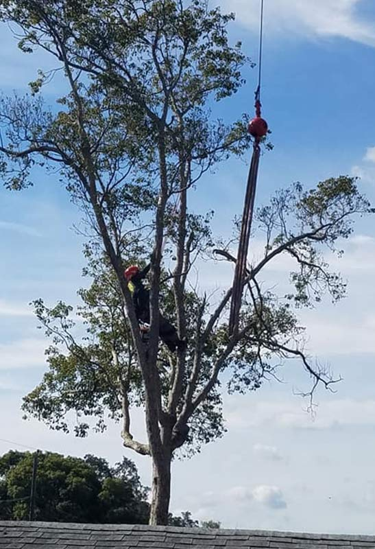 Professional Tree Removal Services in Orlando, FL