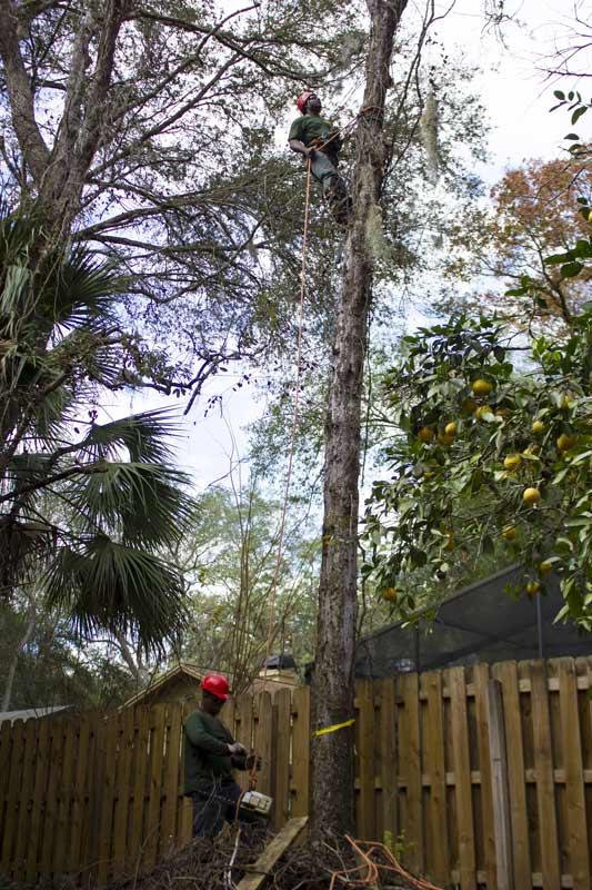Orlando's Tree Removal Service